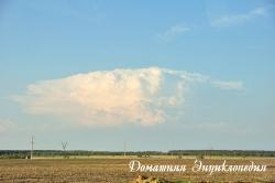 Небо над украинским полем