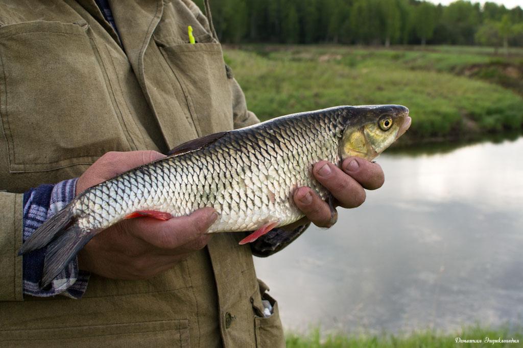 снасти сети для зимней рыбалки