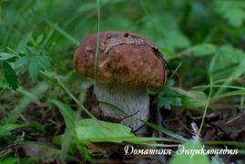 Энциклопедия природы. Грибы. Белый гриб.